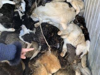 Обращение к Президенту против массовых убийств животных