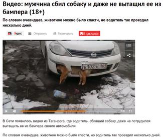 Депутат разъезжал по городу с трупом собаки в бампере