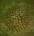 world-tree-1 - Copie.jpg