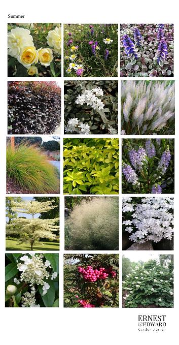 Summer plants 2.png