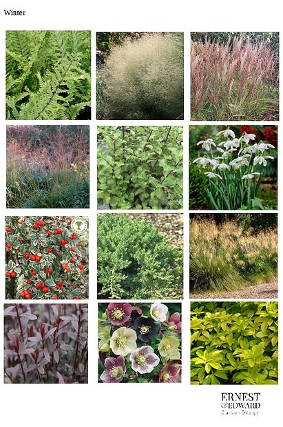 Summer plants.png