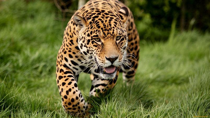 Apprendre les 4 accords Toltèques : La Traque du Jaguar Le Cercle de Vie