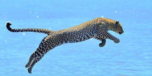 Saut du Jaguar4.jpg