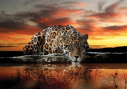 0 Traque du Jaguar.jpg
