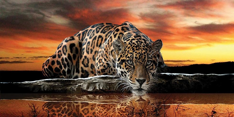 Apprentissage à distance les 4 accords Toltèques - La Traque du Jaguar