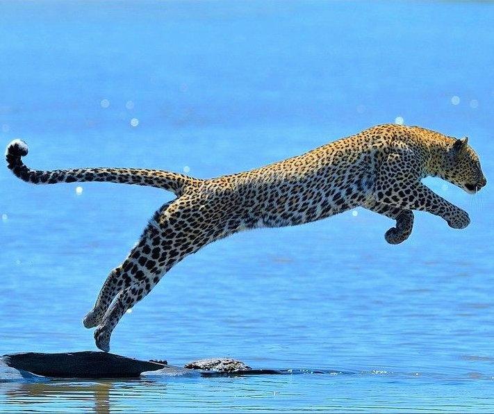 Saut du Jaguar Toltèque