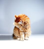 embarrassed cat.jpg