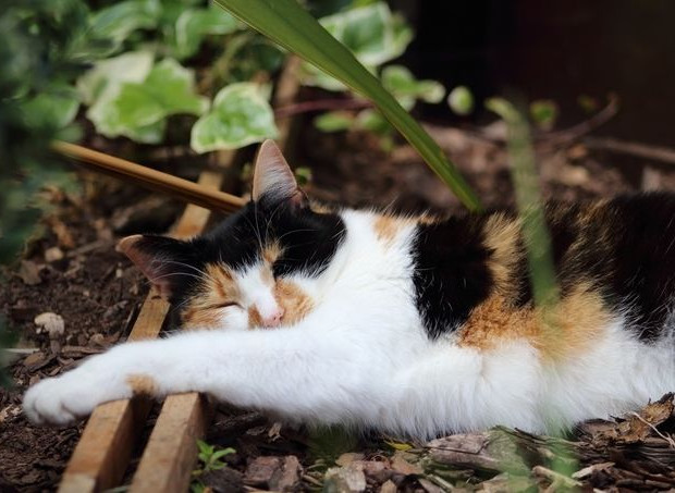 Treacle chooses dirt over a bed