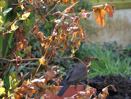 Caring for Winter Wildlife in your garden
