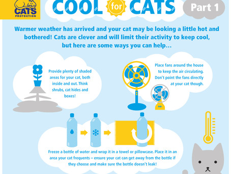 Cats and Warm Weather