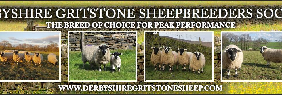 North Sheep Banner 2019.PNG