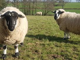 Benters Flock 2_edited.jpg
