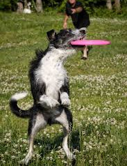 """It's time to teach this """"Old Dog"""" some new tricks"""