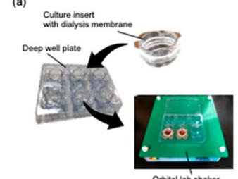 酒井先生と西川先生の透析懸濁液培養に関する論文が「Cells」に掲載されました / A paper on dialysis suspension culture