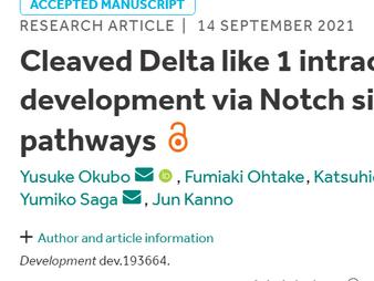 大久保先生のNotch-Deltaシグナル伝達に関する論文が掲載されました / Dr. Okubo's paper on Notch-Delta signaling was published