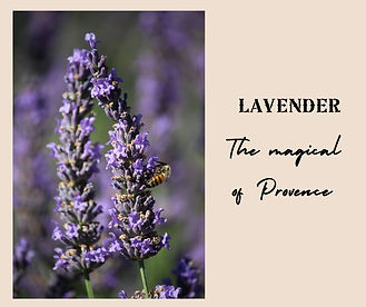 A RANCH IN THE LAVENDERS_page-0018.jpg