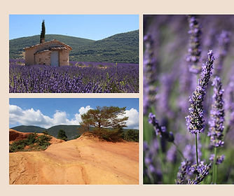 A RANCH IN THE LAVENDERS_page-0017.jpg