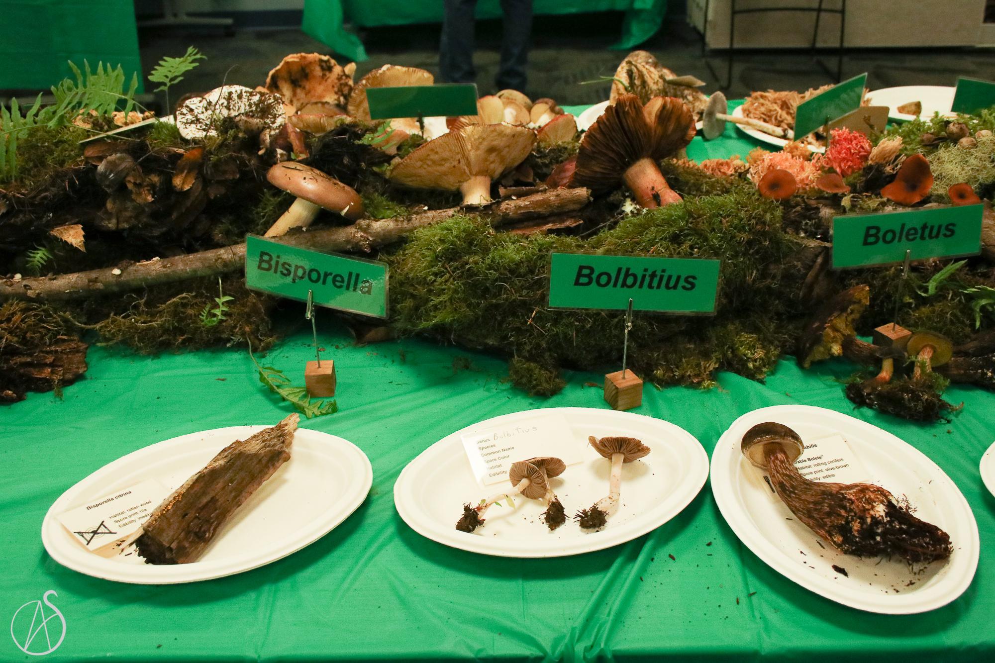 MushroomShow-62.jpg