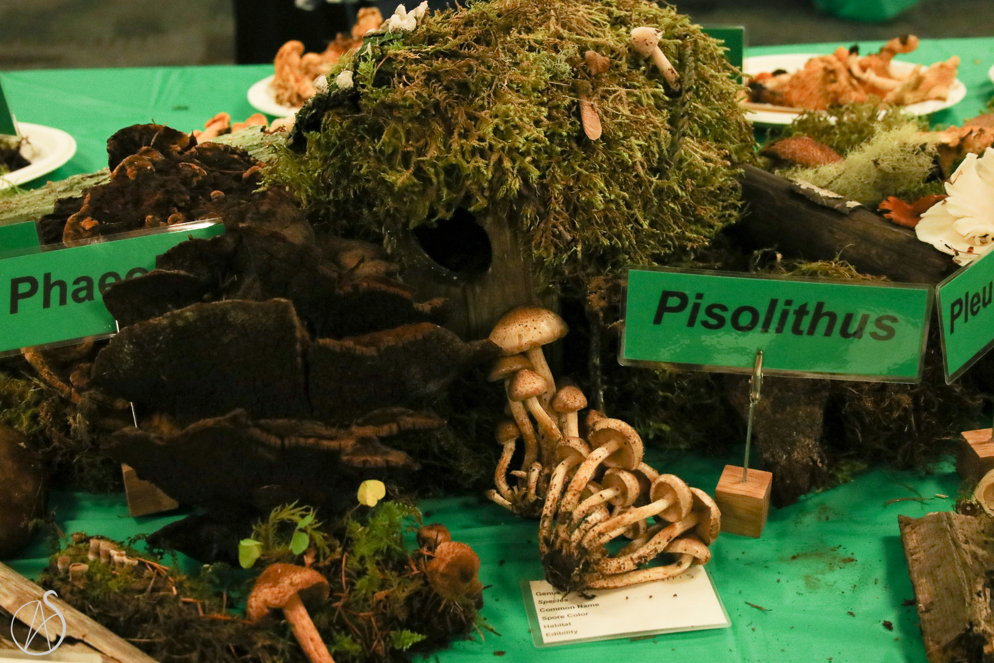 MushroomShow-39.jpg