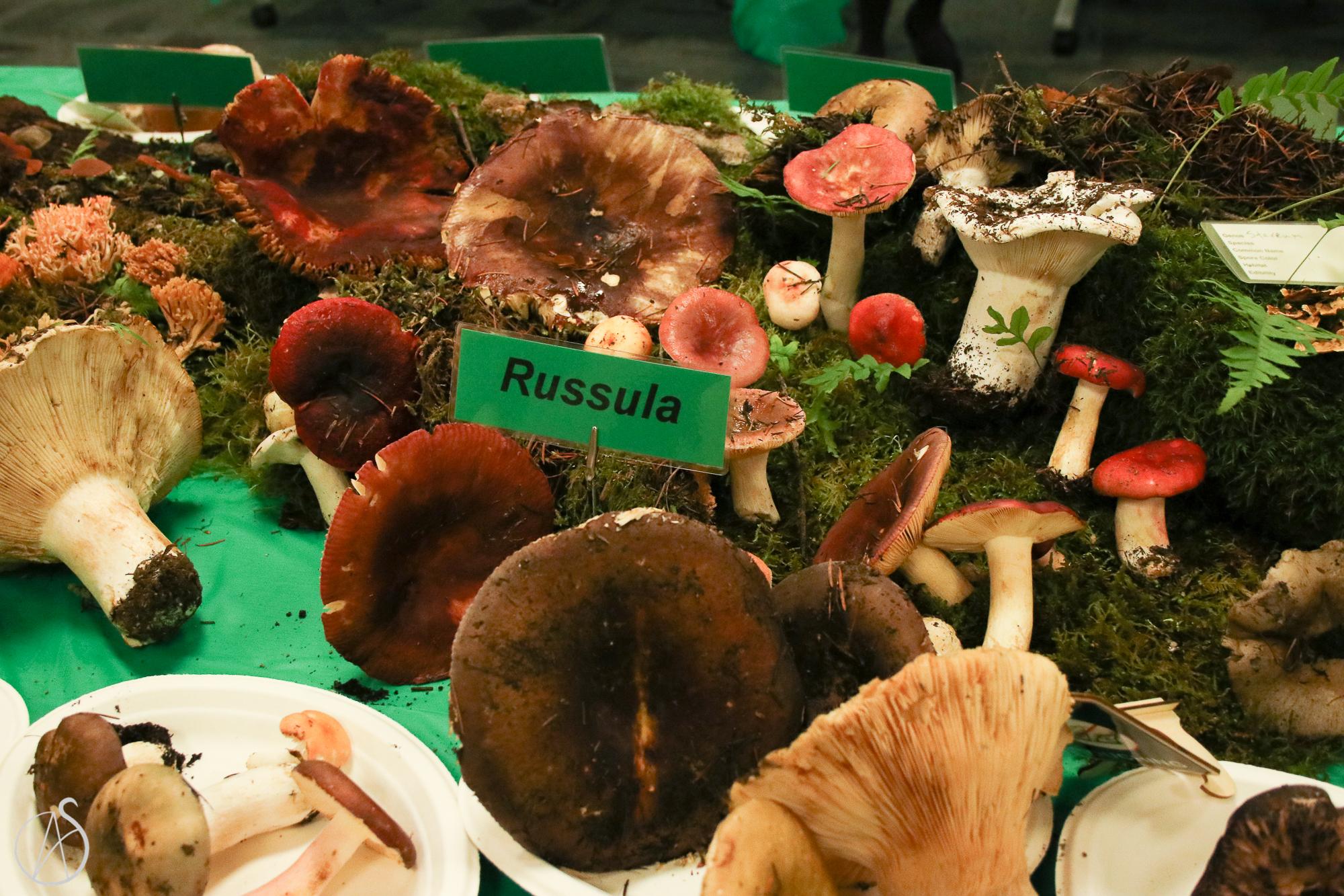 MushroomShow-33.jpg