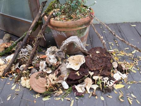 4th Annual Mushroom Show Recap