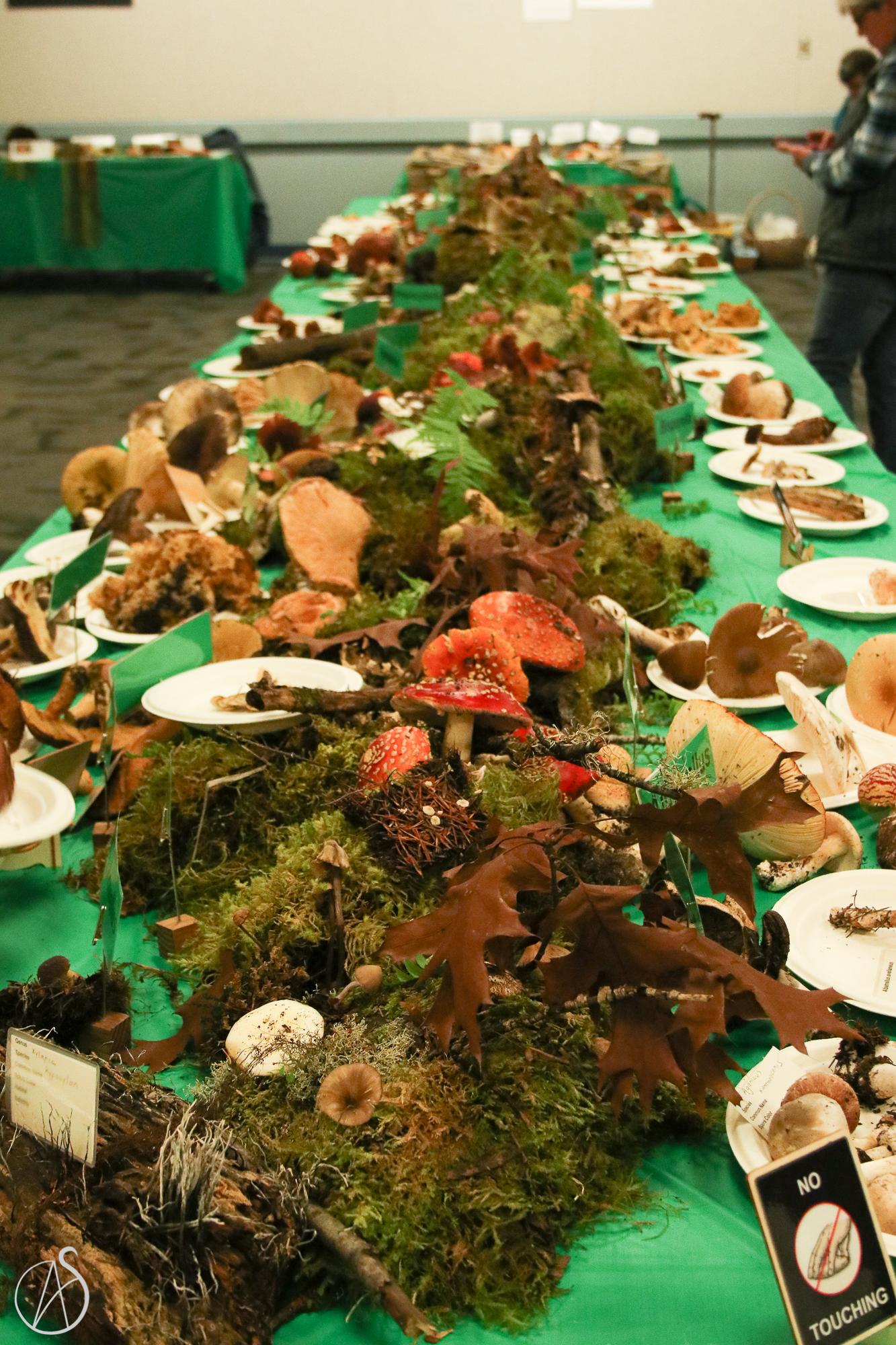 MushroomShow-17.jpg