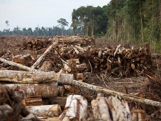 Neoliberalisme dan Kerusakan Lingkungan