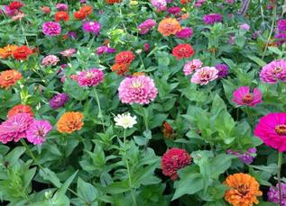 School Garden News