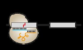 CRISPR single gRNA library