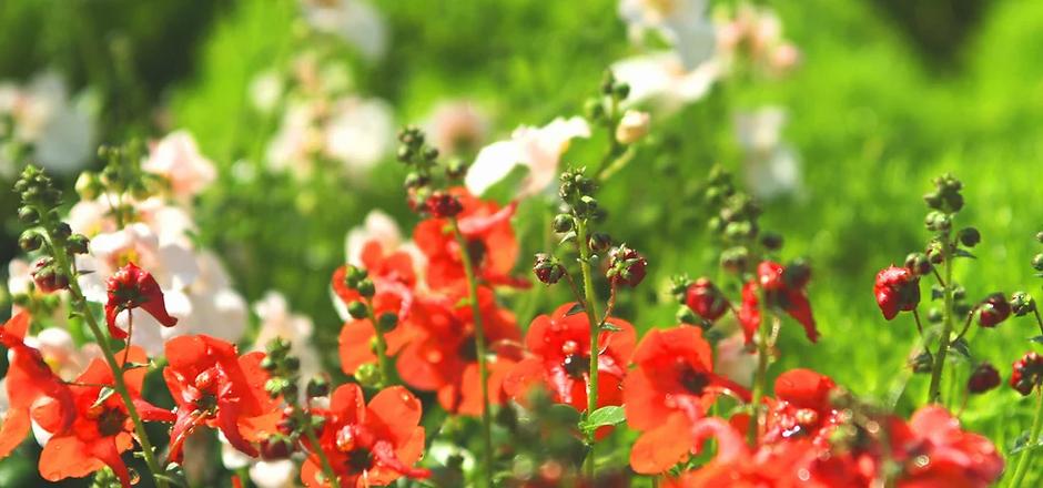 Wild Flowers .webp