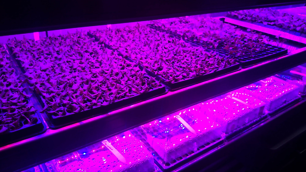 The bottom is our germination shelf and the top shelf is the seedling trough. LED lights helping them grow!