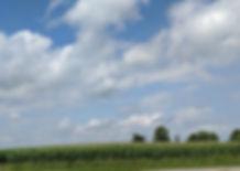 Corn fields in Canaan Township.jpg