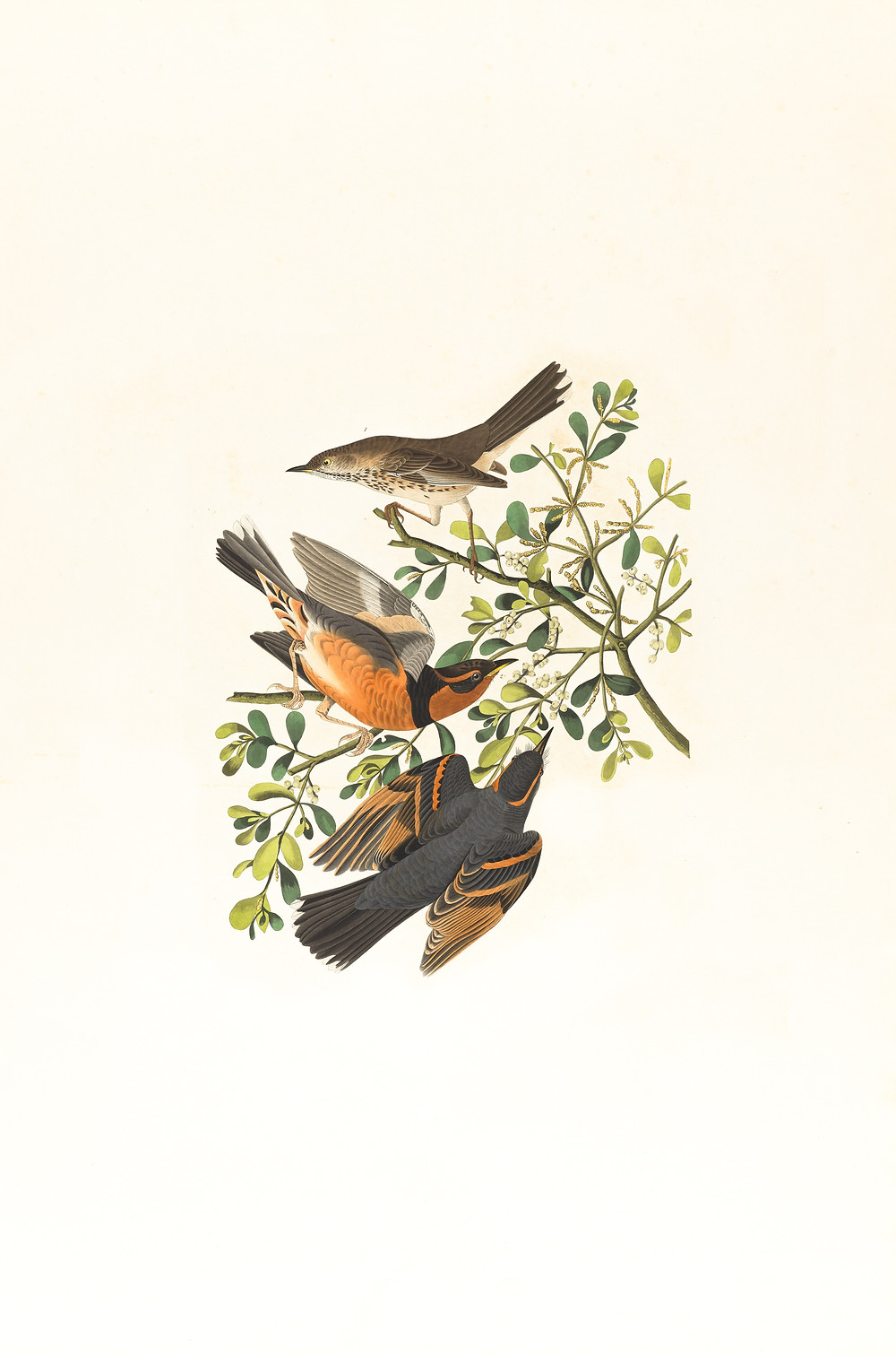 Even the sparrows, have a place to lay their head. So why should I let worry steal my breath?