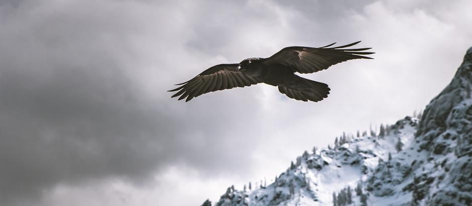 Like an Eagle