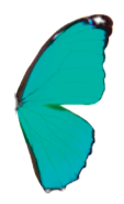 Teal-Butterfly-Logo_edited_edited.png