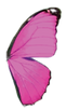 Pink-Butterfly_edited_edited.png