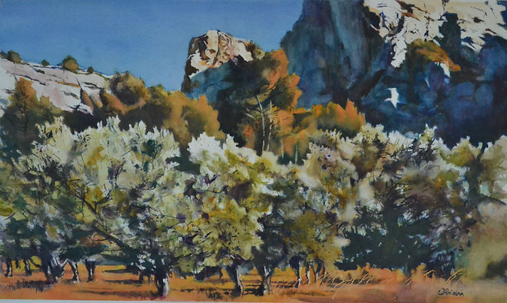 Aquarelle. Oliviers dans les Alpilles. Provence.