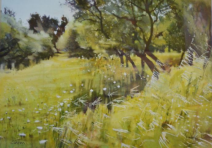 Champ d'oliviers au printemps 72 cm x 52