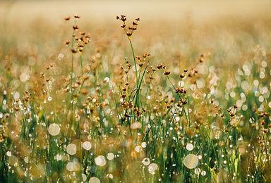 floral-865823.jpg