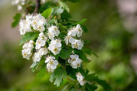 spring-5514731_1920.jpg