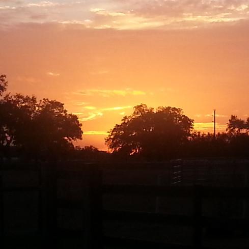 Sunset over pasture.jpg