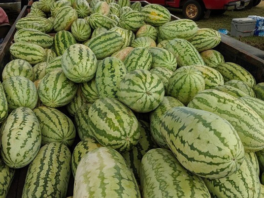 Watermelons from Full Harvest