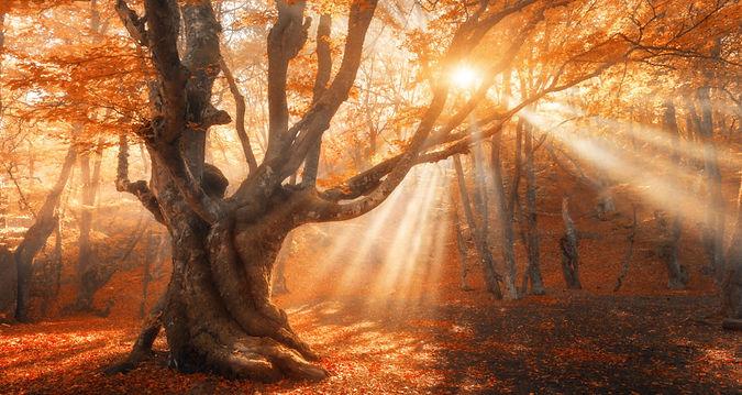 Autumn Equinox.jpeg