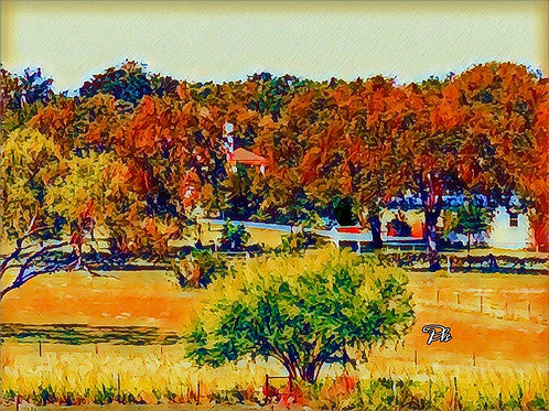 Country Backyard View
