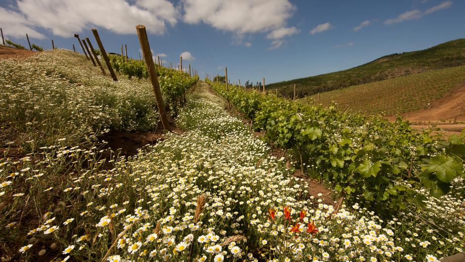 Cuatro razones para celebrar al vino chileno en su día