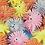 Thumbnail: חיות אצבע נמתחות
