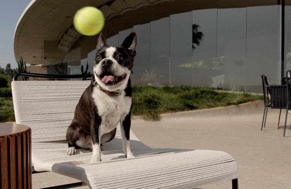 claude_looks_at_tennis_ball_still.jpg