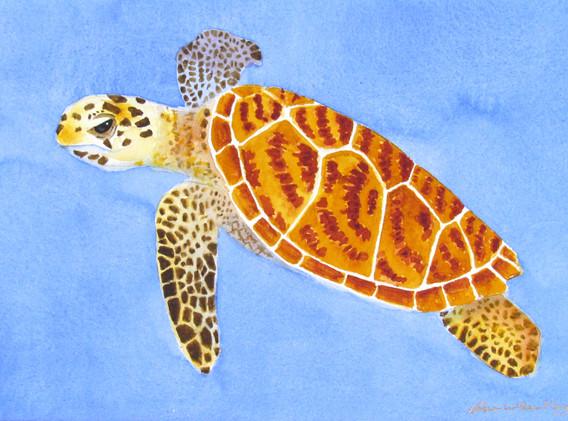 Turtle Too