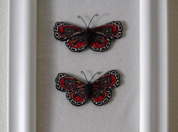 butterflies_44and45.jpg