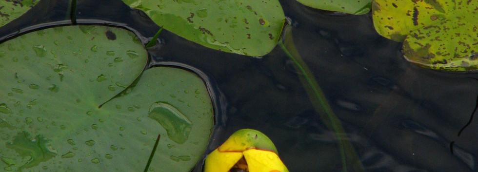 Floating+Sanctuary.jpg